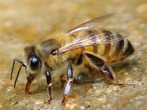 укус пчелы как снять отек с глаз на второй день