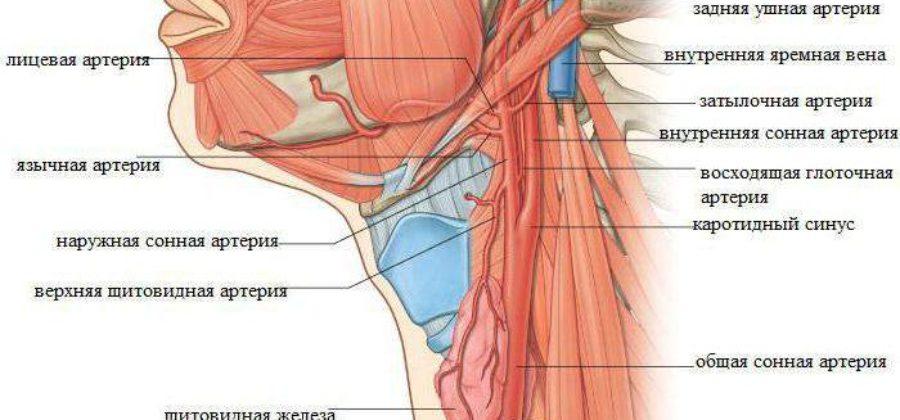 Может ли выжить человек после перелома шеи