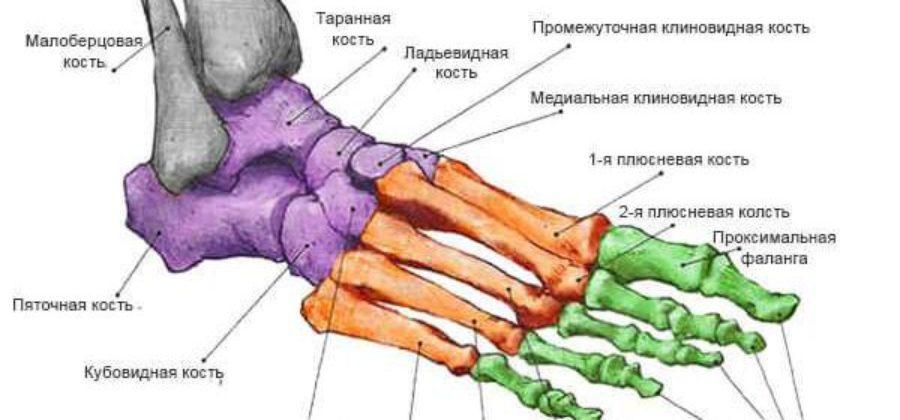 Почему не срастается перелом 5 плюсневой кости?