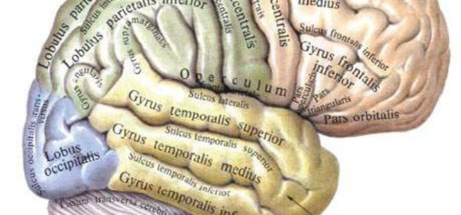 Что такое отек легких и головного мозга?