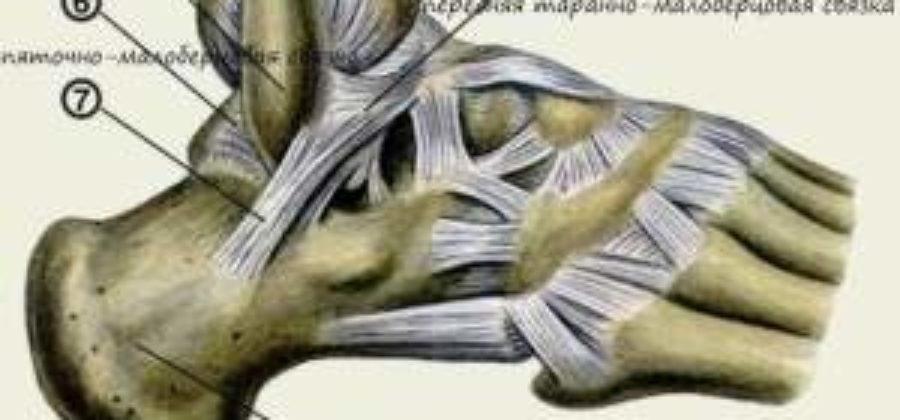 Ушиб и растяжение связок правого голеностопного сустава что делать